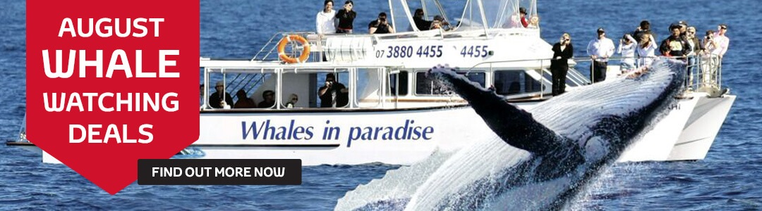 Grand Motors Toyota - August Whale Watching Deals
